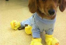 Cute Dog Pics / by Barbara Fink