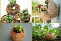 cultivo no coco