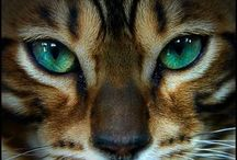 JUST CATS / by Georgena