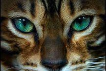 Кошки и котята, тигры и др.