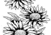 Coloring Pages of AAS Winners / Take the time to relax and color these AAS winners! #ColoringPages / by National Garden Bureau