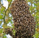 Get your own Bees / How to set yourself up with your own hive, for lots of honey and pollination of your garden!