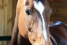Horse / Love horse