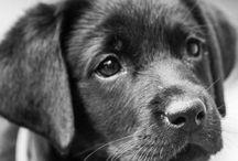 Söta hundar