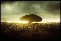 Africa- my heart, my home / by Kayla Shepard