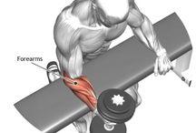 Gym - Forearms