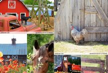 :farmstead: / Homesteading and more.