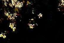 My Pictures-01 / 日常の撮影した写真