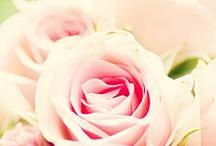 bloemen / rozen / by pimpamjet