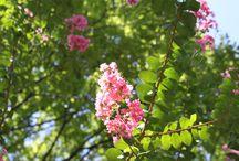 植物園 / 服部緑地都市緑化植物園 2012-09-16