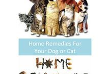 Books on Pets