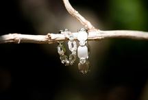 wedding rings / by Melanie Attwell