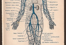 anatomic bomb