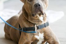 Wagging Dogs in Our Care / by WaggingDog Rescue