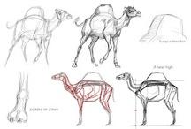 Anatomy Animal, Fantasy