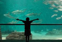Family-friendly travel adventures / Places for the whole family to have fun.
