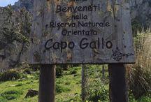 Vincenzo Perricone / Riserva di Capogallo (PA)