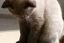 Biscuit (my lovely cat)