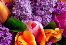 WEDDINGS Purple Rain