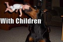Funny doberman  pictures