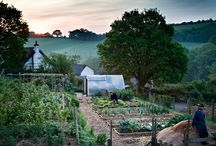 {Vegetable Garden Inspiration & Tips} / A collection of inspiring vegetable gardens as well as tips, tricks, and ideas to help get your garden growing!   If you would like to pin to this board, you have to follow my pins (Pinterest rules) and then leave a comment on one of MY pins on this board.  / by Reformation Acres