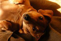 Puppy 101 / by Breana McCormack