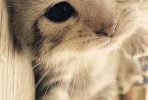 cats and kittens :) / the cutest pictures of that animals :)