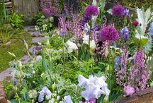 Gardens / by Sheri Nelson