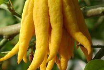 Gyümölcsök /frutas