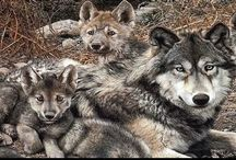 Wolves / by Vanessa Bettencourt