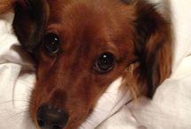 Wiener doggies ♡