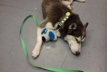Cool Pet Photos / by The Speaking Husky