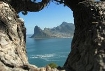 Hout Bay Cape Peninsula  / Choose from a variety of Hout Bay accommodation establishments through Cape Point Route, helping to make your stay in the region an unforgettable one. Hout Bay, a picturesque village surrounded by protective mountains with a long sandy beach that is ideal for swimming and watersports like sea kayaking, sailing, fishing, surfing. The lively fishing harbour hosts many tourism activities including boat trips as well as being a working harbour for the tuna and crayfishing industries.