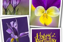 Verjaardag kaarten