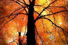 Autumn Beauty / I love the colors of autumn