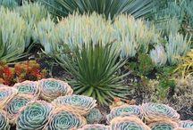 Gardens > Dry/Mediterranean