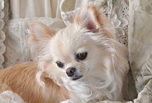 LITTLE DOGS-2