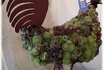 composizioni  con  le  succulente