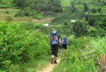 Dalat Vietnam Jungle Trekking