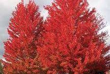 Falls Favorite Trees