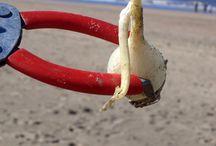 DMMU - Beach Clean Ups