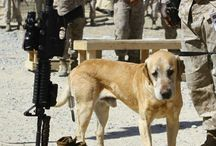 Dogs on duty
