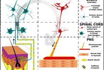 Movement & Neuroscience