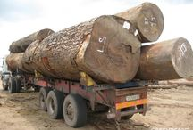 Ochrana pralesů