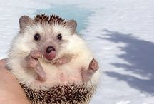 Love Animals !! / Trop cute