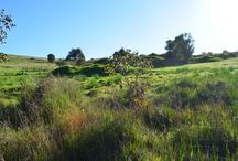 Country and Rural Properties for Sale / Rural land and country land for sale in Western Australia.