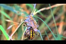 Weird Insects And Spiders / Weird and freaky insects from all around the world!