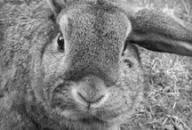 My rabbits