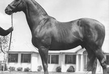 Notable Steeds / Famous horses / by Integrity Horse