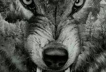 Kurt    wolf